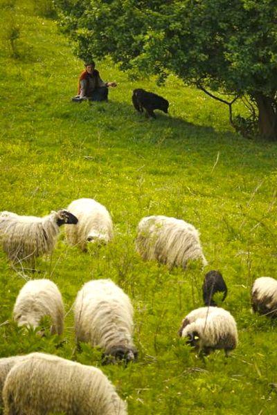 Hier is herder nog een echt vak