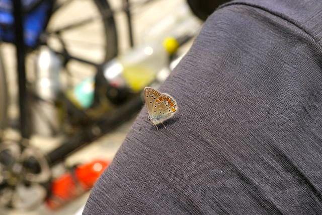 Vlinder (en een stukje van Maarten)