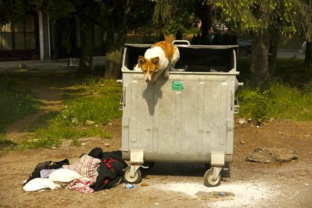 zwerfhond in Bulgarije