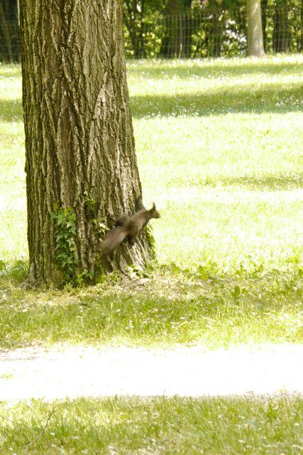 De campingeekhoorn in Aquilea