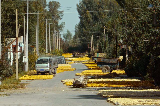 Ook op het Chinese platteland is het najaar dus wordt overal de oogst binnengehaald
