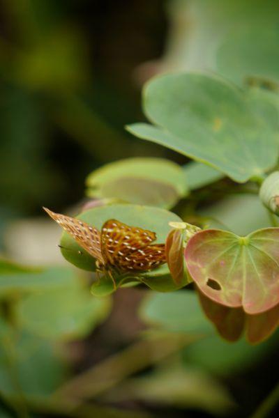 En veel mooie vlinders - Deze bleef lang genoeg stilzitten om te fotograferen.-