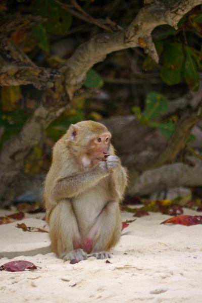 Op Monkey Island in Ha Long Bay