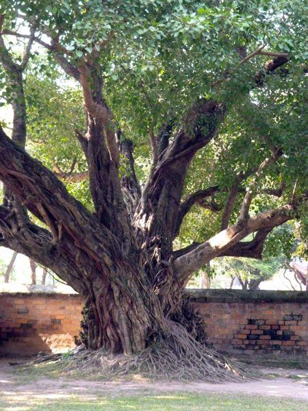 Binnen de muren van een tempelcomplex in Hanoi