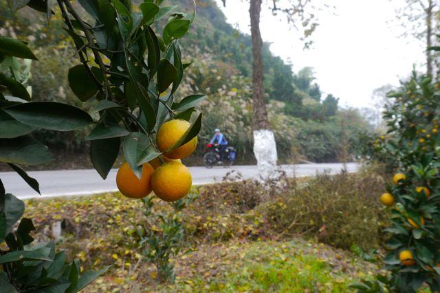 Citrusvruchten