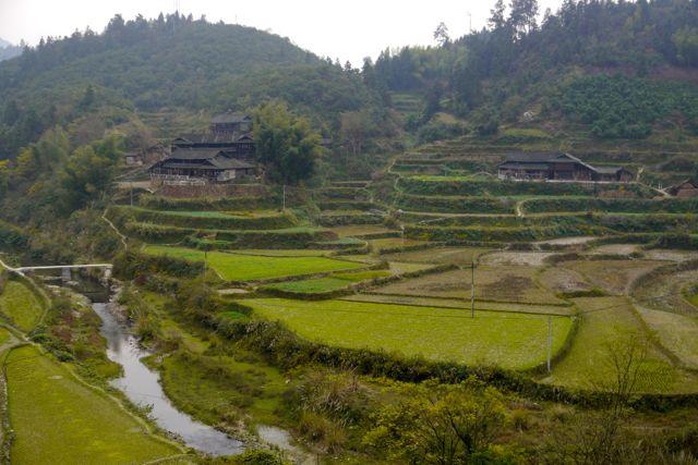 En dan de eerste echte rijstvelden.