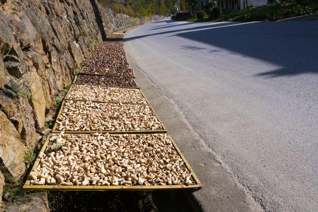 Hefst = paddestoelentijd, ook in China. Maar ze liggen wel in de zon te drogen.