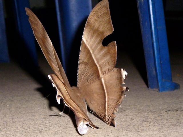 Een nachtvlindertje.