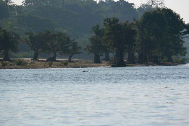 Dolfijnen spotten in de Mekong